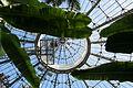Allan Gardens greenhouse 016.JPG