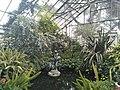 Allans Garden.jpg