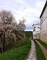 Almendros - panoramio - MGR.jpg