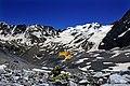Alpine Blumenwunder.jpg