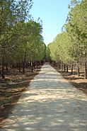 Alsos forest path for pedestrians in Nicosia Republic of Cyprus