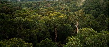 English: View of Amazon basin forest north of ...