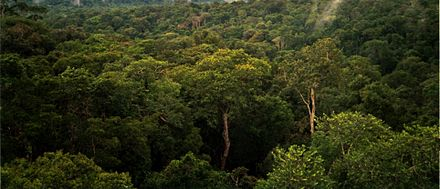 An area of the Amazon Rainforest shared between Colombia and Brazil. The tropical rainforests of South America contain the largest diversity of species on Earth. Amazon Manaus forest.jpg