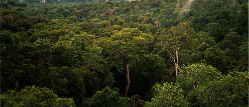 Amazon Rainforest in South America Amazon Manaus forest.jpg