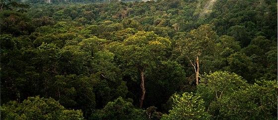 غابة الأمازون Wikiwand