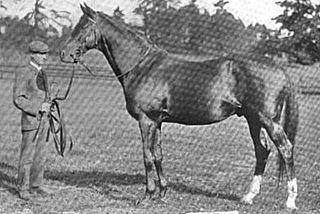 Amphion (horse) race horse