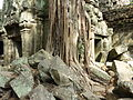 Angkor - Ta Prohm - 009 Tree over Buildings (8580835539).jpg