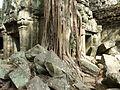Angkor - Ta Prohm - 009 Tree over Buildings (8580835539).jpg
