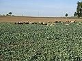 Ansichten von Deckenpfronn 123.jpg