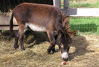 Apple-Donkey-yumyum.jpg