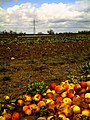April Frühling Rhine Valley winter apple - Deutschland magic Germany 2013 - panoramio.jpg