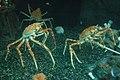 Aquarium (4477486780).jpg