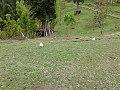 Arang Kail 01.jpg