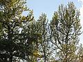 Arboretum Zürich 2014-04-23 18-24-21 (P7700).JPG