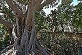 Argotti gardens-IMG 1408.jpg