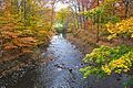 Autumn Foliage in Natirar, New Jersey File 5.jpg