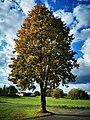 Autumn in Mainhausen.jpg