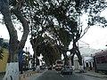 Avenida Pedro de Osma 2.jpg
