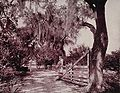Avenue of Moss-Covered Oaks, Near Ormond, Florida.jpg