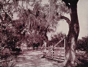 Volusia County, Florida - Avenue of Moss-Covered Oaks, Near Ormond, Florida -- an 1893 duotone print