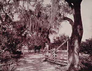 Volusia County, Florida - Avenue of Moss-Covered Oaks, Near Ormond, Florida -- an 1893 duotone print