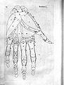 B.S. Albinus, Historia musculorum hominis Wellcome L0024318.jpg