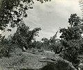 Baboons (BOND 0352).jpg