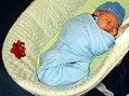 Baby Gurr (4245984654).jpg