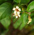 Bali 019 - Ubud - delicate flowers.jpg