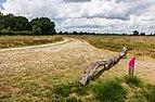 Balloërveld, natuurgebied in Drenthe 006.jpg
