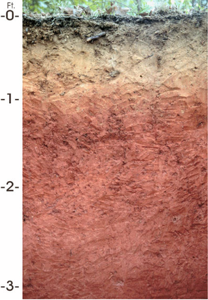 Loam - Three layers of subsurface loam; surface layer is dark brown fine sandy loam, subsurface layer is pale brown fine sandy loam, subsoil is red clay loam and sandy clay loam.