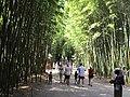 Bambouseraie prafrance.jpg