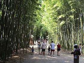 bambou sec