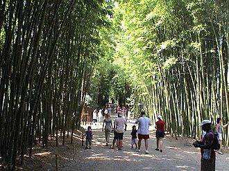 Bambouseraie de Prafrance - Bambouseraie de Prafrance