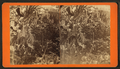 Banana tree with fruit, from Robert N. Dennis collection of stereoscopic views.png