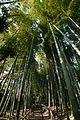 Bannboo forest (11331157044).jpg