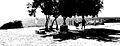 Bashir Apollonia Tree Black and White (3608270358).jpg
