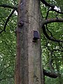 Bat box in Holly Hill woodland park - geograph.org.uk - 1437741.jpg