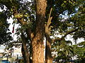 Bauan,Batangasjf9499 13.JPG