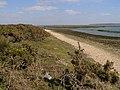 Beach at Needs Ore Point - geograph.org.uk - 392231.jpg