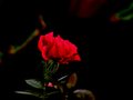 Beautiful Pink Flower.png