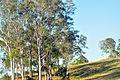 Belli Park Sunshine Coast Queensland Australia (16).jpg