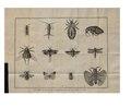 """Berger-Perrière, J. Aug., """"Introduction à l'histoire naturelle des insectes, en forme d'entretiens (...)"""".pdf"""