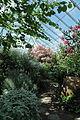 Bergianska trädgården-IMG 3387.jpg