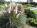 Bermuda (UK) image number 252 plant.jpg