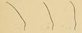 Bertillon - Identification anthropométrique (1893) 063.1.png