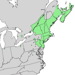 Betula populifolia - Image: Betula populifolia range map 2