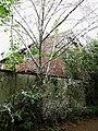 Beuel-broetalbahnweg-gespinstmotte-12052015-01.jpg
