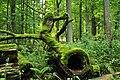 Bialowieza National Park in Poland0029.JPG