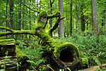 Bialowieza National Park in Poland0029.JPG